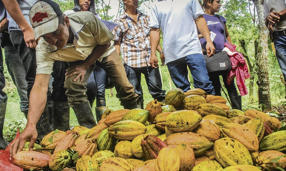 Cacao nica sigue cosechando éxitos.
