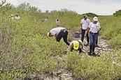 Reforestan mangle en Puerto Morazán
