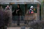 Muere un animal en un incendio en el zoo de Londres